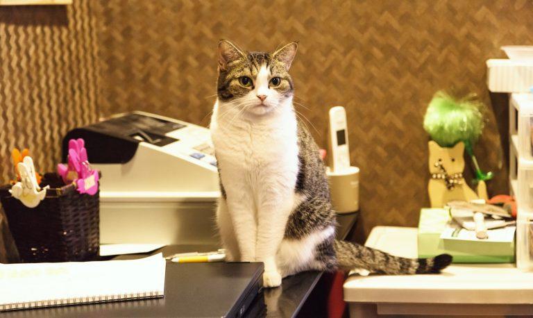 レジの前で店番をする猫