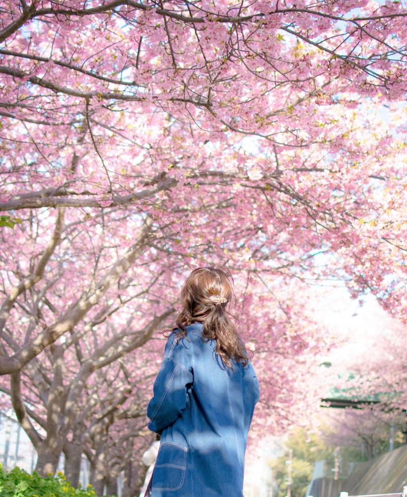 満開の桜を見あげる